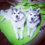 Hayley's family dogs Aura and Desmo