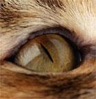 Cornea_Eye_4329545