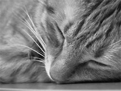 Desex_Sleeping_cat75208