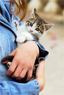 Staff_Kittenhands